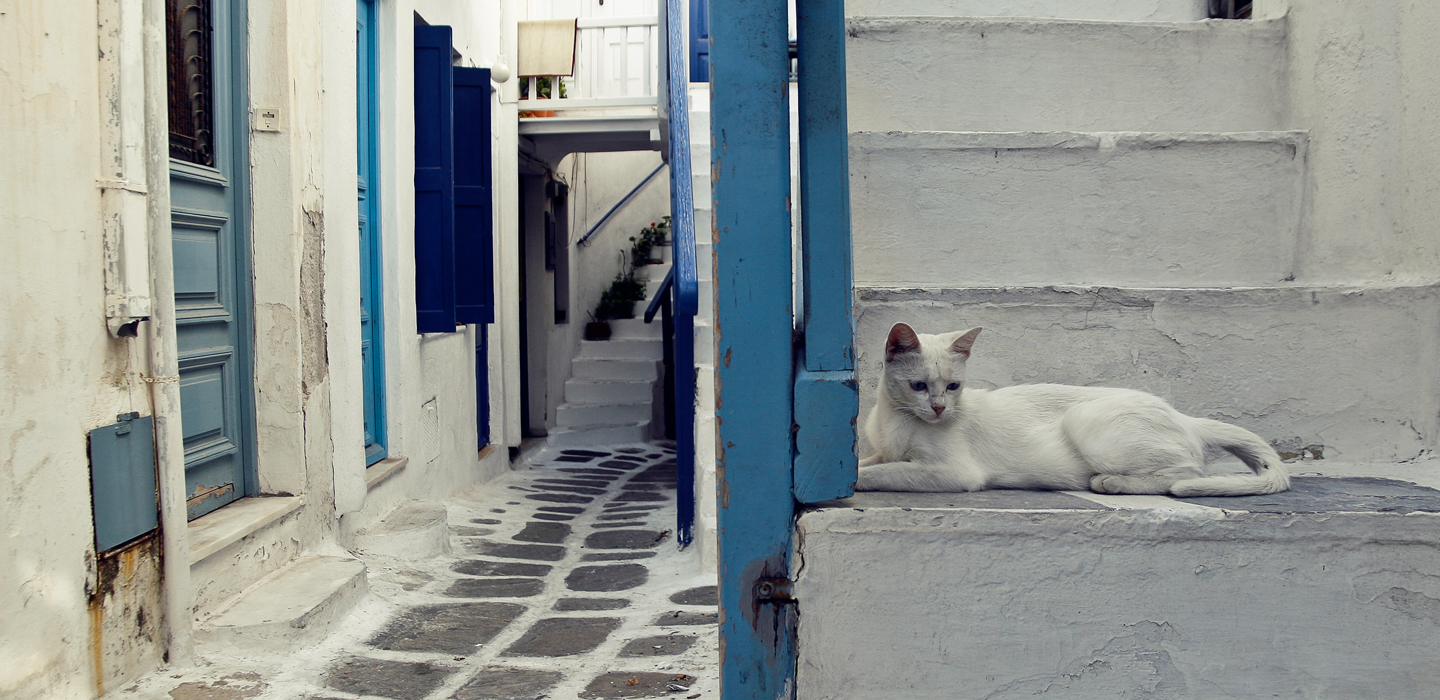 Mykonos cat on stairs